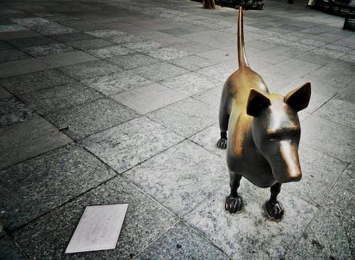 Základová fotografie zdarma na téma fotografování zvířat, pejsek, pes, socha