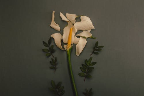 White Flower On Grey Background