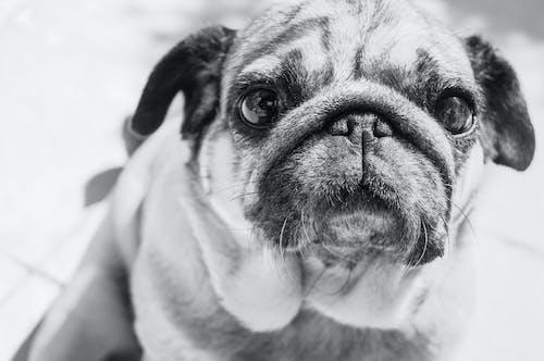 Бесплатное стоковое фото с домашнее животное, домашний, животное, лицо