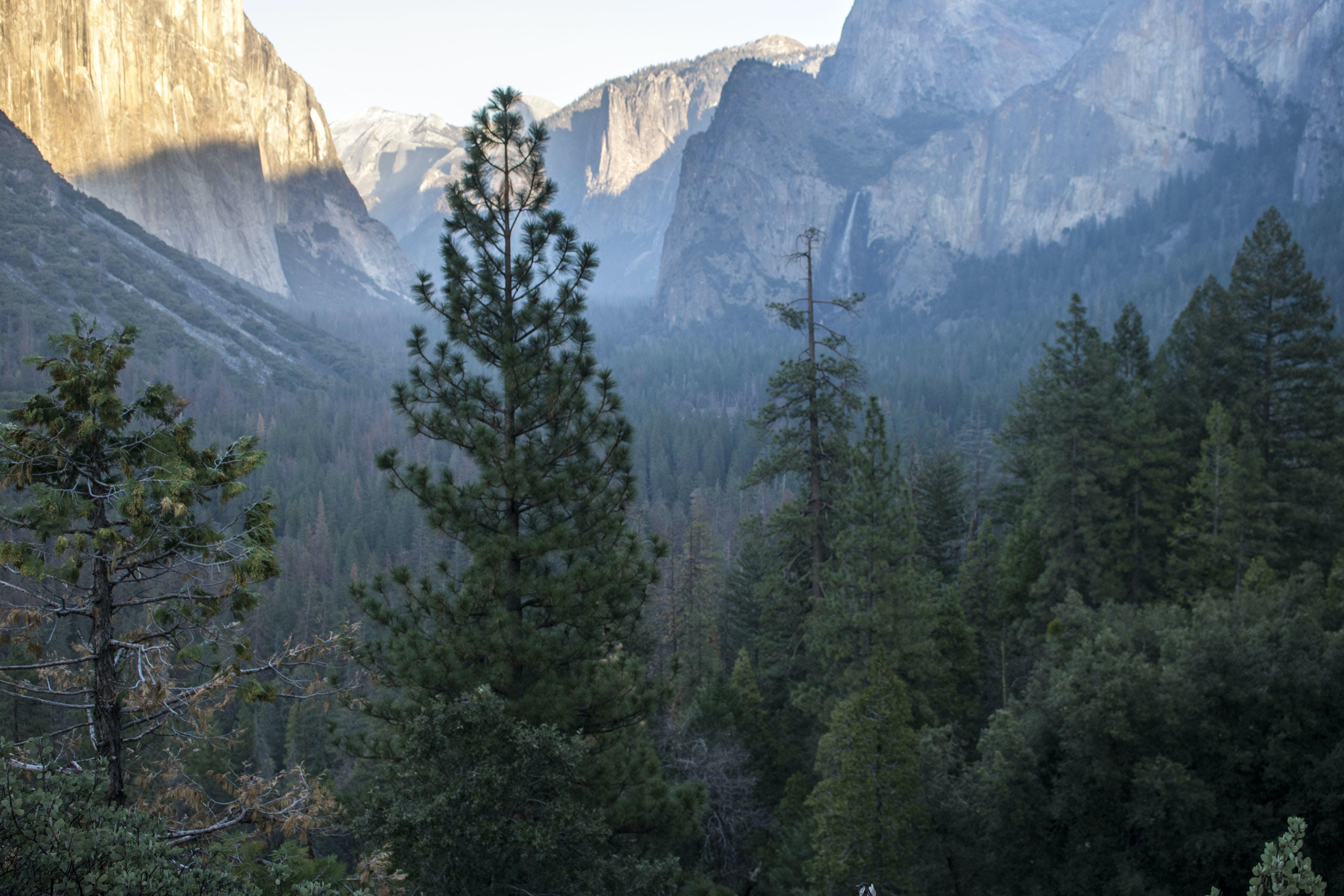 Free stock photo of forest, mountain, photograph, yosemite