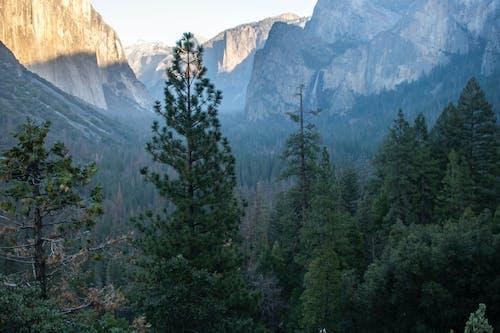 Fotos de stock gratuitas de bosque, montaña, yosemite