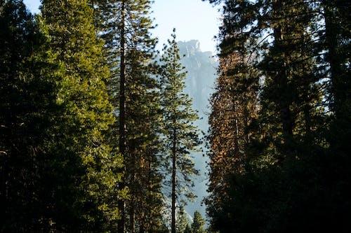 Fotos de stock gratuitas de arboles, montaña, yosemite