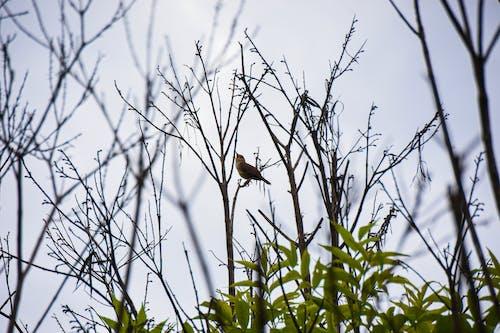 Gratis arkivbilde med fugl, natur