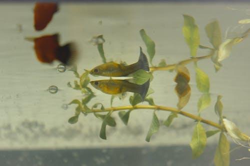 Free stock photo of fisheye