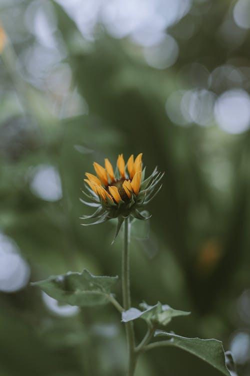 Yellow and Orange Flower in Tilt Shift Lens