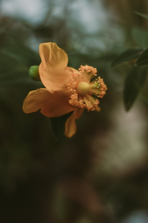Free stock photo of everything yellow, flower, yellow flower