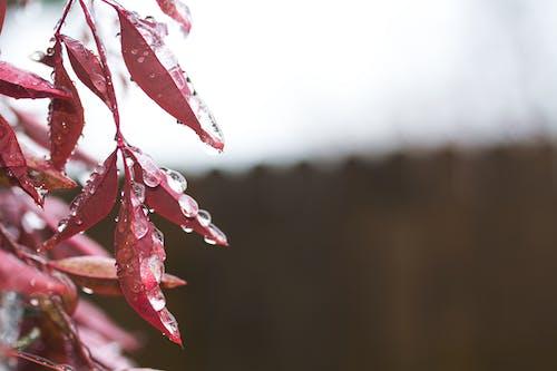 增長, 天性, 季節, 專注 的 免费素材照片