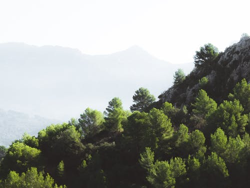 Green Pine Trees Near on Rock Formation