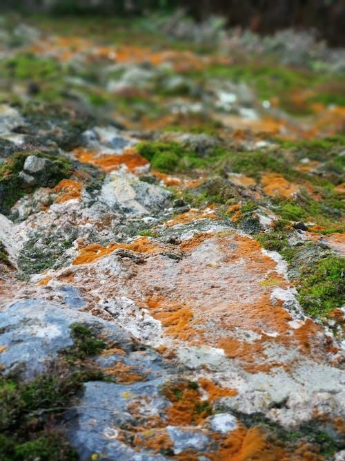 Бесплатное стоковое фото с живописный, камень, лето, мох
