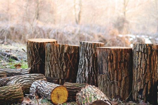 Kostenloses Stock Foto zu holz, natur, trocken, bäume