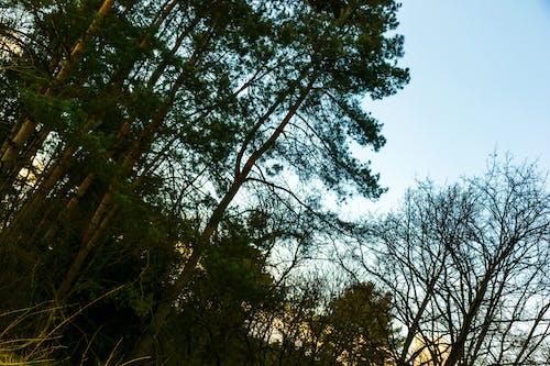 Photos gratuites de arbres, aube, branche, ciel dégagé