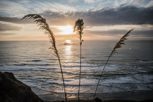 Silhouette Photograph of Grass Beside Seashore