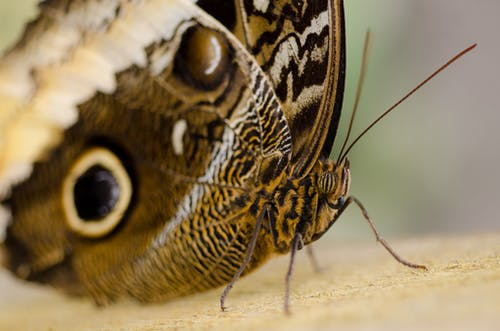 Close-up Photography of Brown Butterfly on Brown Surface