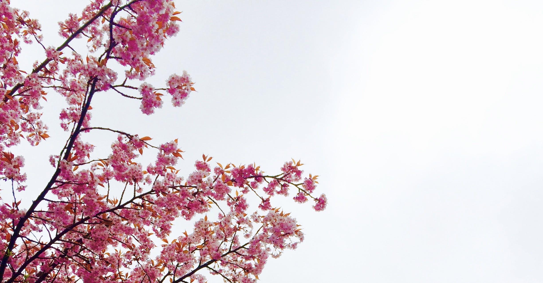 zu blumen, blüten, flora, frühling