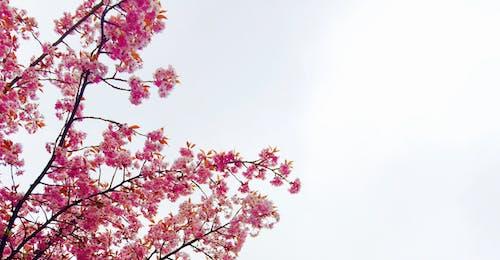 Gratis arkivbilde med blomster, blomstre, flora, himmel