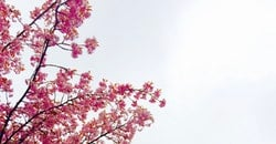 sky, flowers, spring