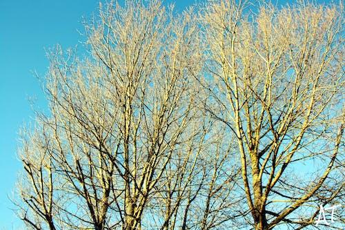 Kostenloses Stock Foto zu äste, aufnahme von unten, bäume, baumstamm