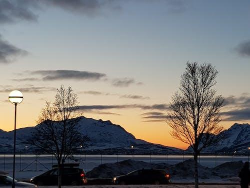 Immagine gratuita di alba, alberi, auto, cielo