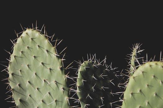 Free stock photos of cactus · Pexels