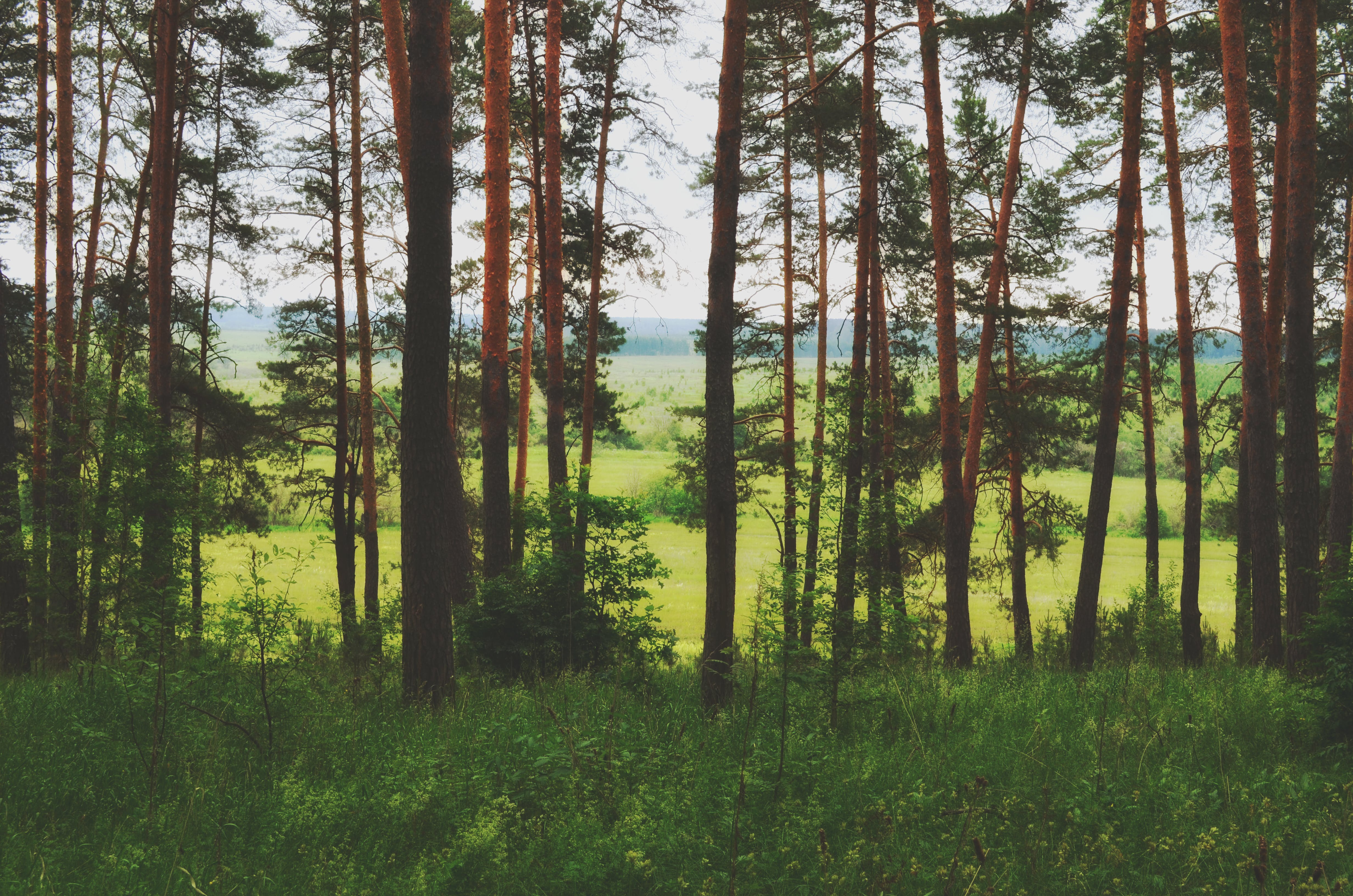 Free stock photo of forest, nature, wild forest