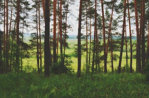 森林, 自然, 野生の森の無料の写真素材
