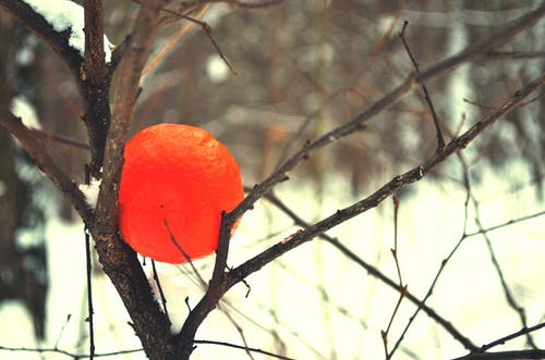 オレンジ, オレンジジュース, フルーツの無料の写真素材