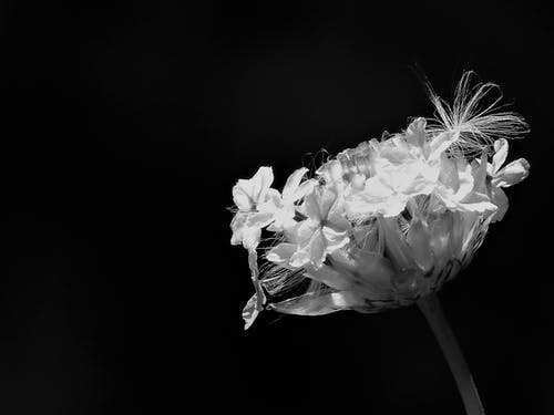 Yellow Petaled Flowers Grayscale Photo
