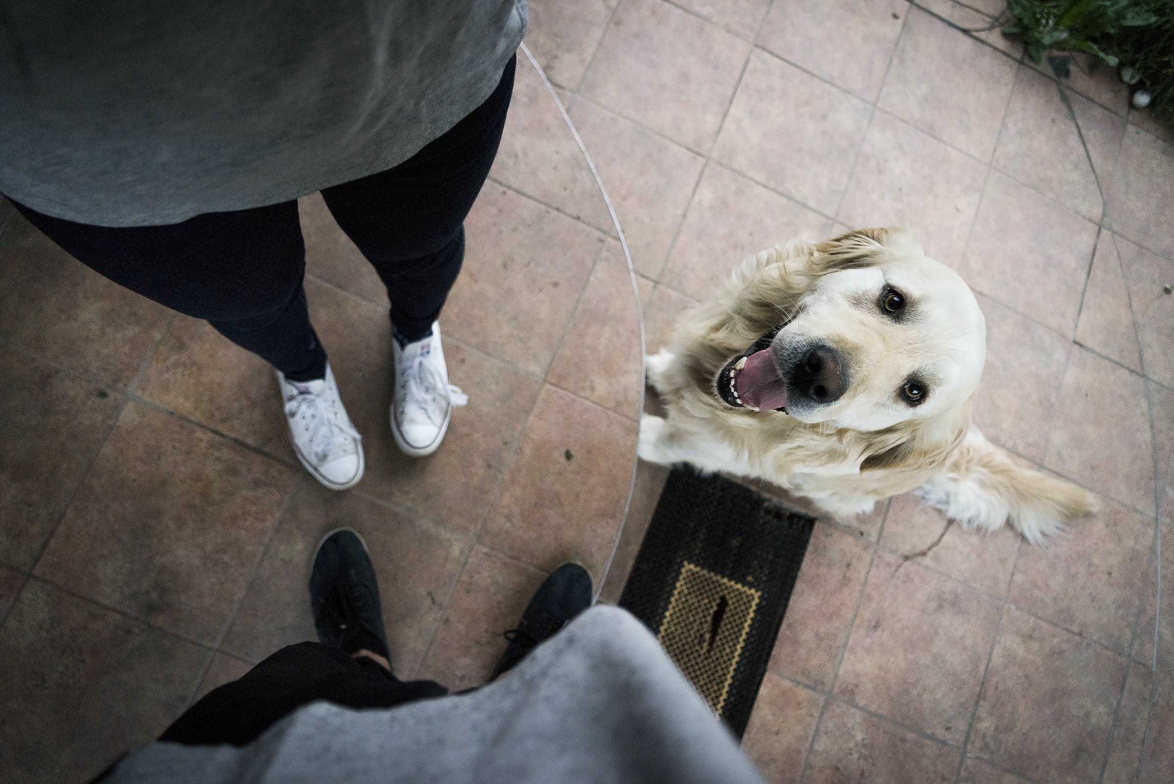Light Golden Retriever Beside Standing Person in White Shoes