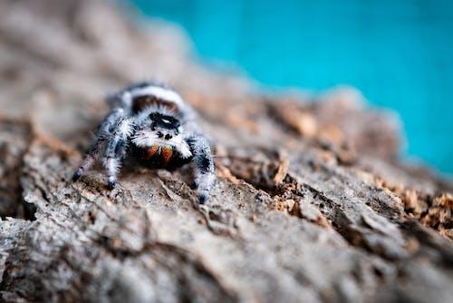 Close-Up Shot of a Tarantula on a Wood