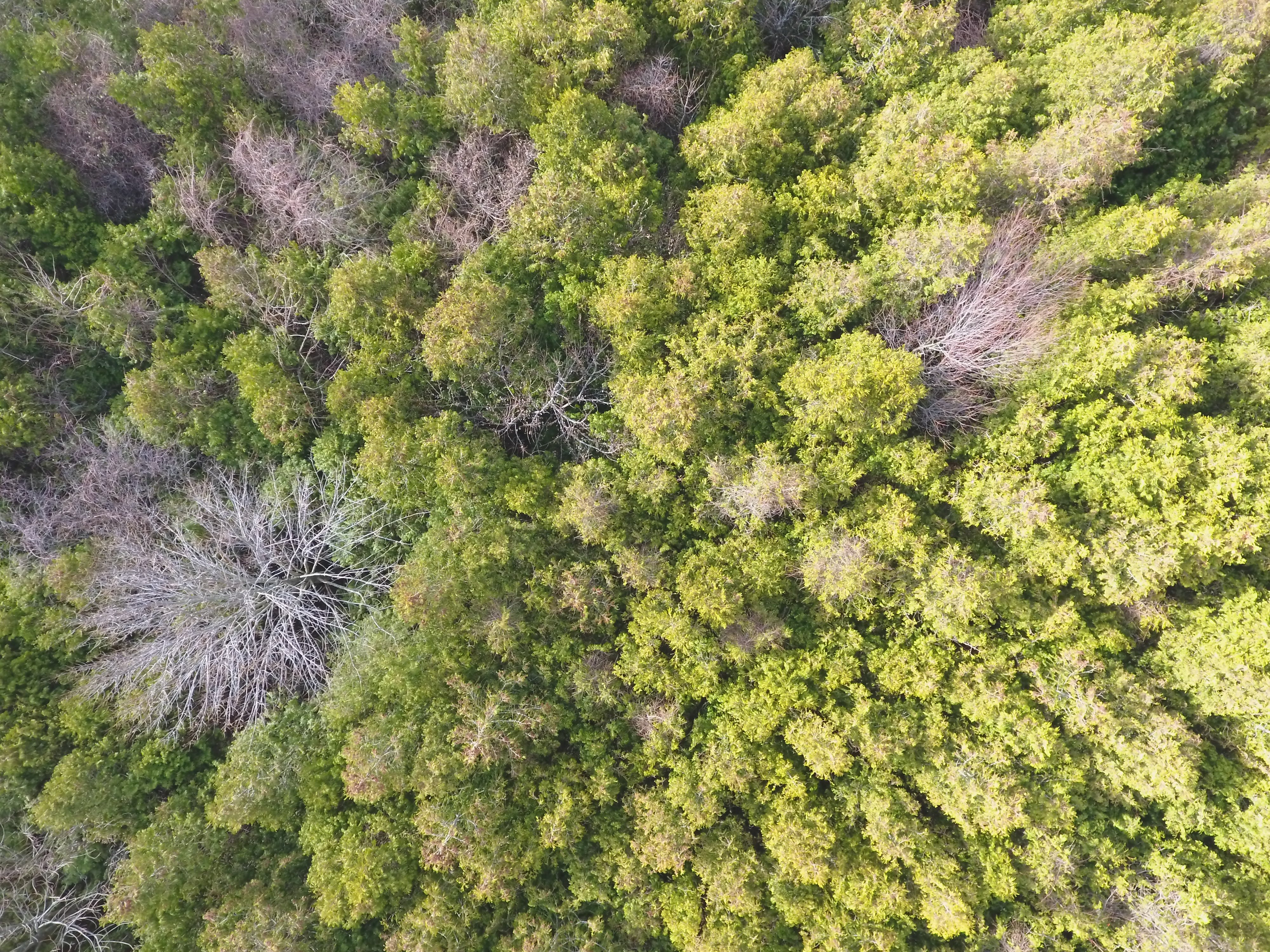 Aerial Photo of Green Forest Trees