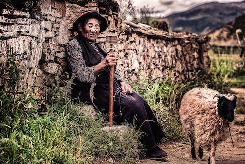 Woman Sitting on Rock Beside Wall and Near Sheep