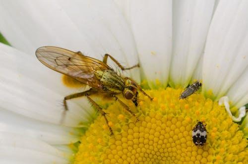 動物, 小蟲, 昆蟲, 花 的 免費圖庫相片
