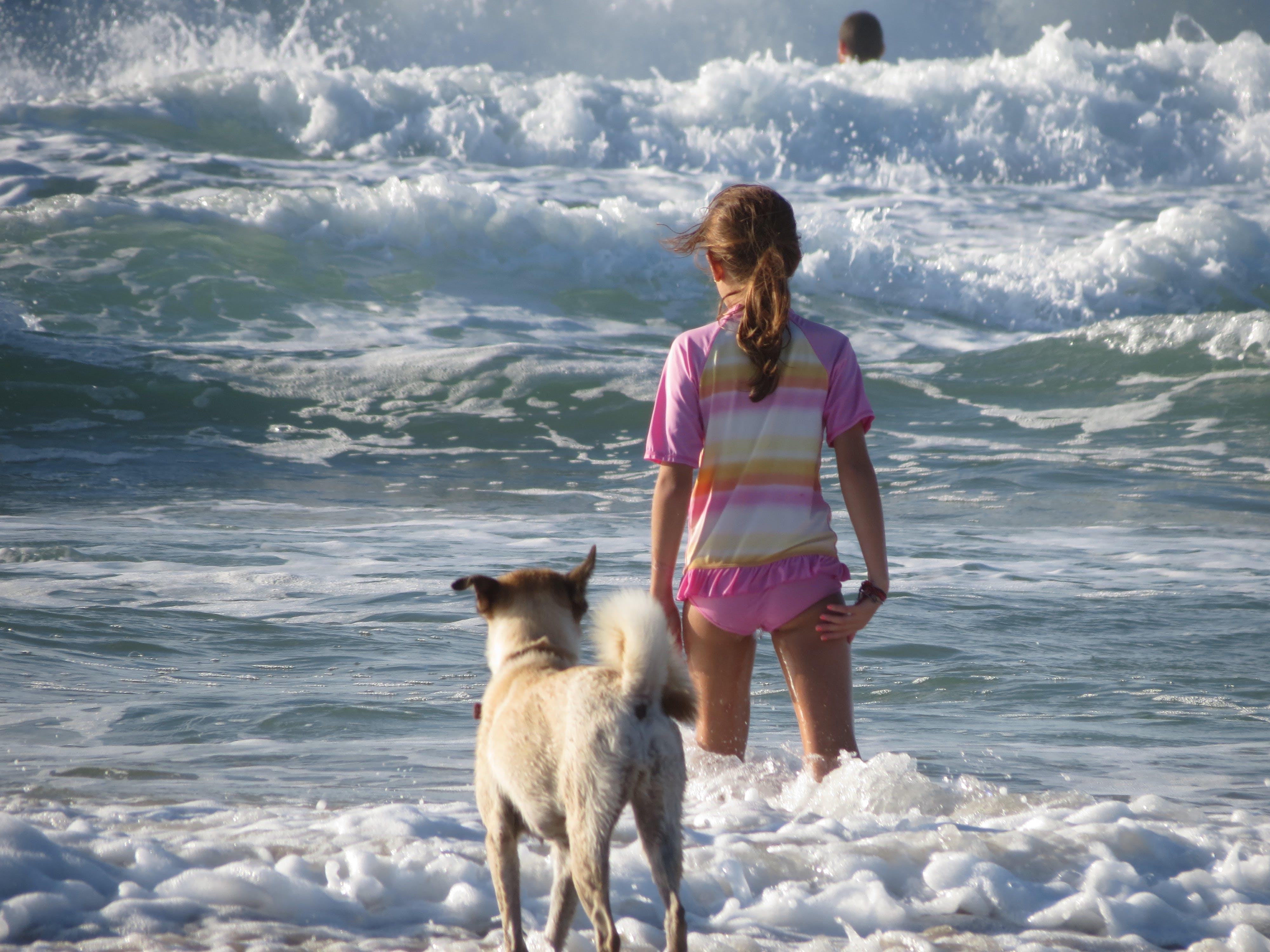 개, 소녀와 개는 바다에 입장, 손을 흔들다, 위험의 무료 스톡 사진