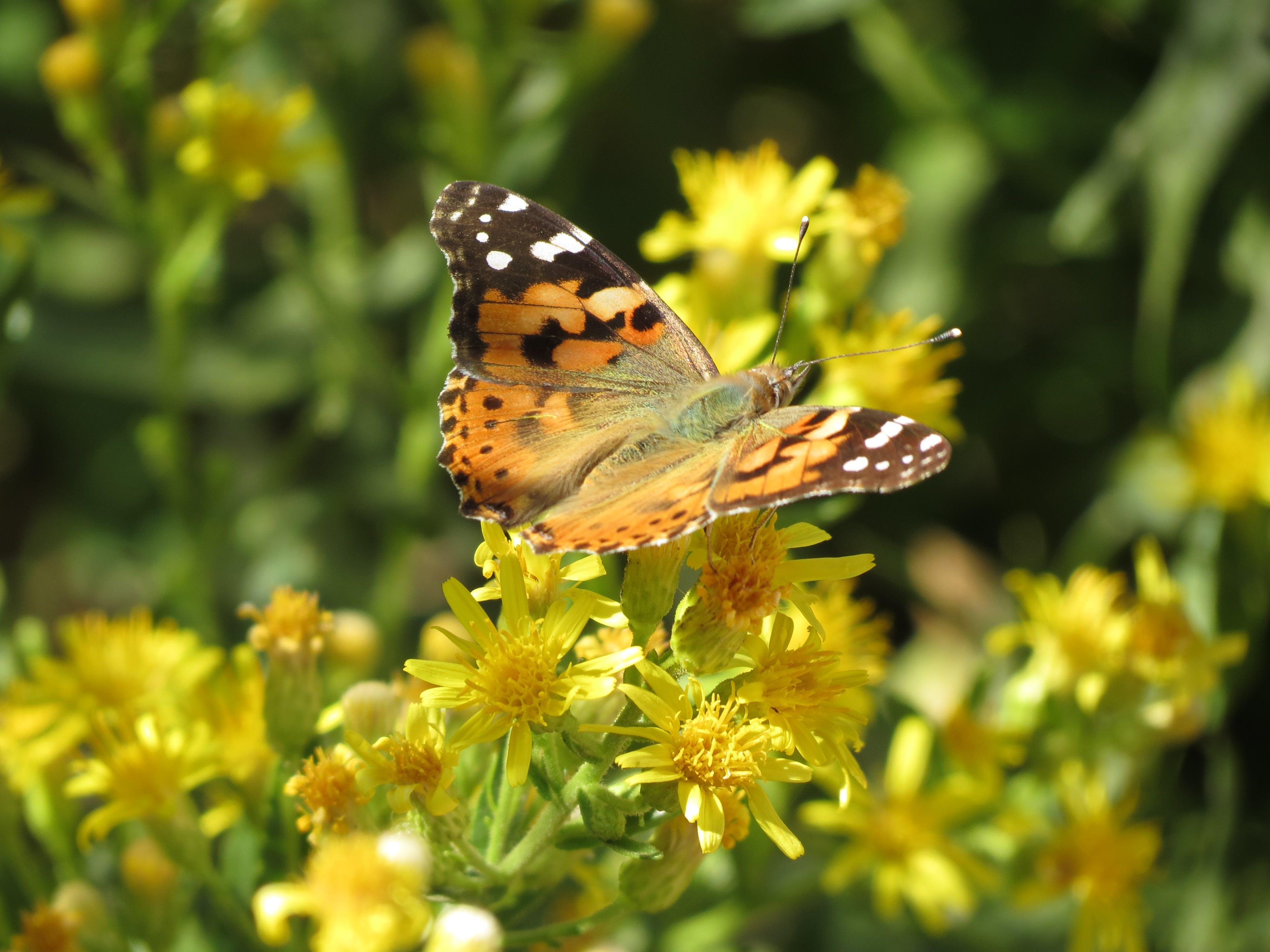 꽃에 나비, 노란색, 다채로운, 자연의 무료 스톡 사진