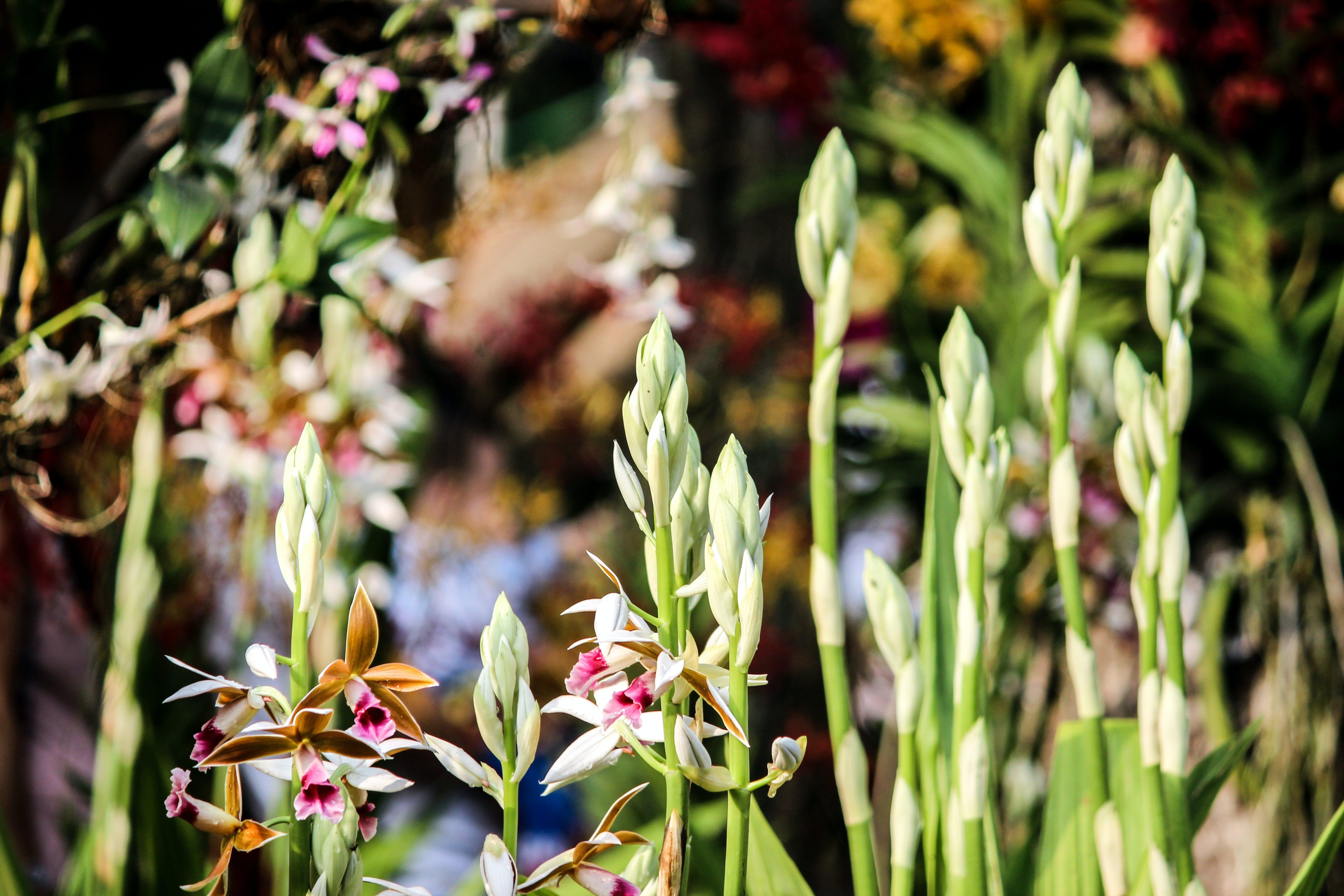 Kostenloses Stock Foto zu blumen, blüte, blütenblätter, botanisch