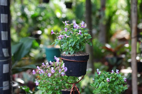Foto d'estoc gratuïta de bonic, flor, jardí