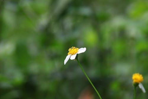 Foto d'estoc gratuïta de flor, flors boniques