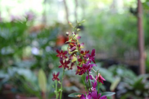 Foto d'estoc gratuïta de flor, orquídia
