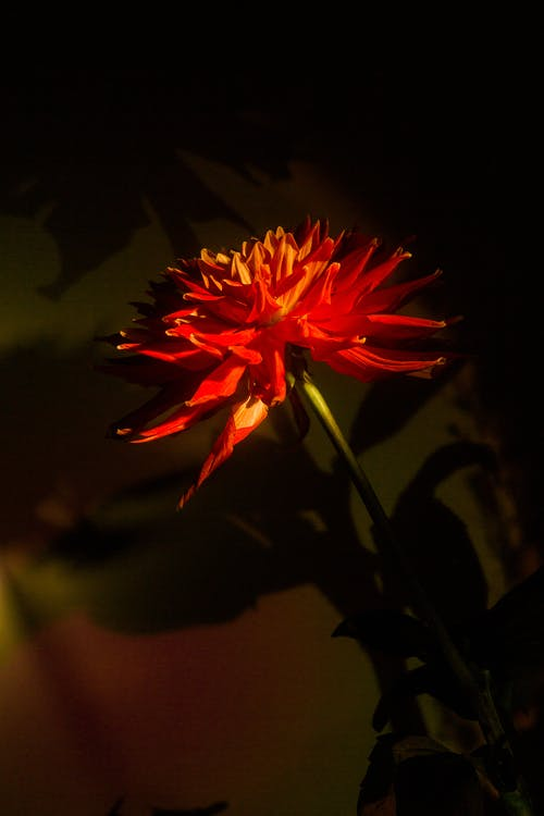 가벼운, 가을, 꽃의 무료 스톡 사진