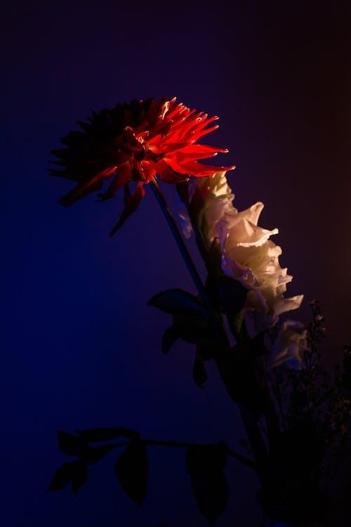 가벼운, 꽃, 무척추동물의 무료 스톡 사진