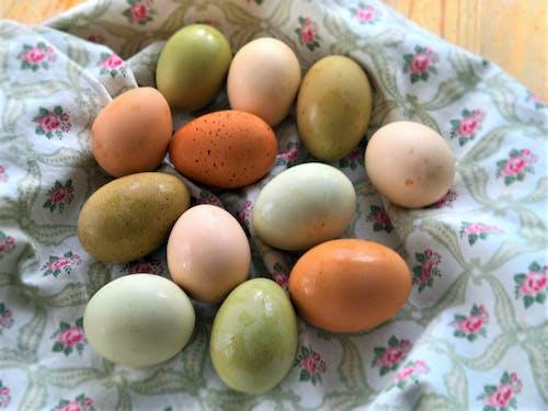 Free stock photo of egg, raw eggs