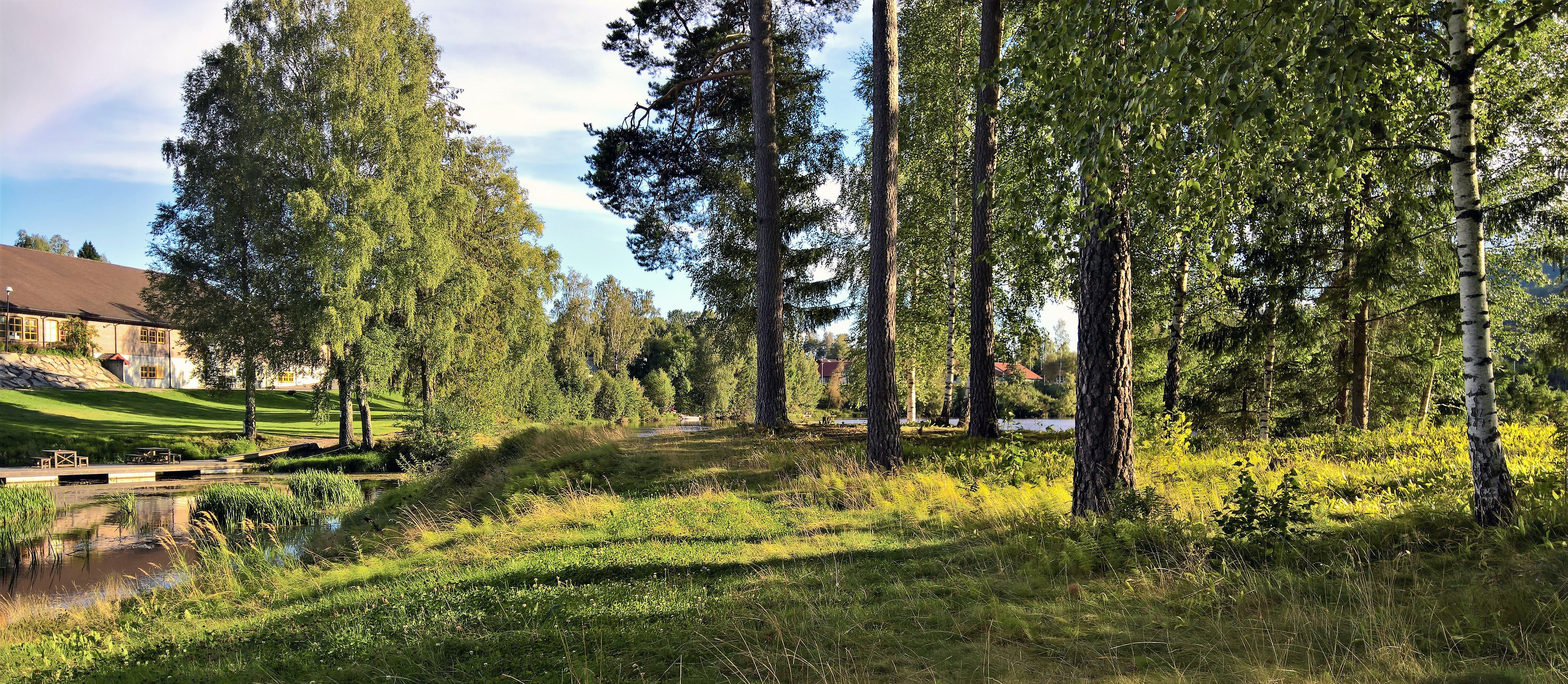 Landscape Photograph of Tree Line