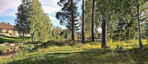 Бесплатное стоковое фото с деревья, дневной свет, дорожка, живописный