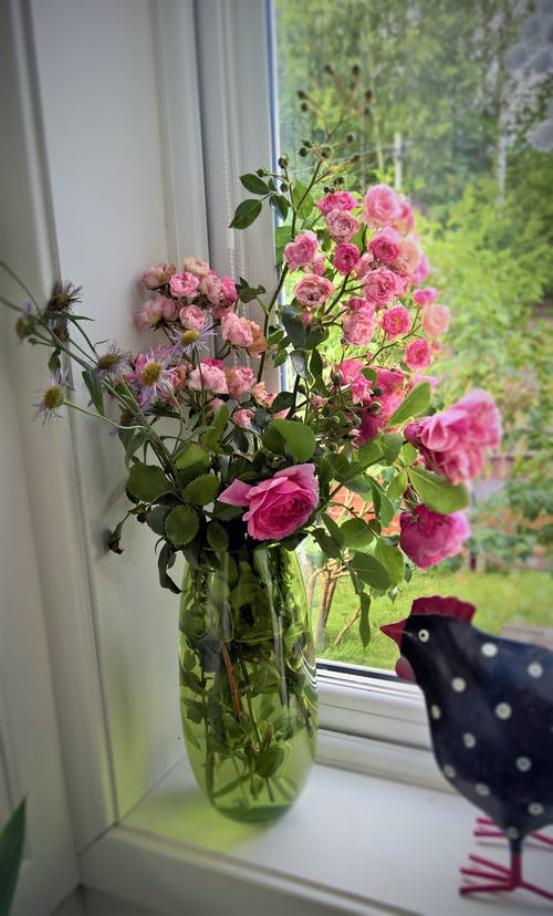 Free stock photo of pink roses, rose, rose vase