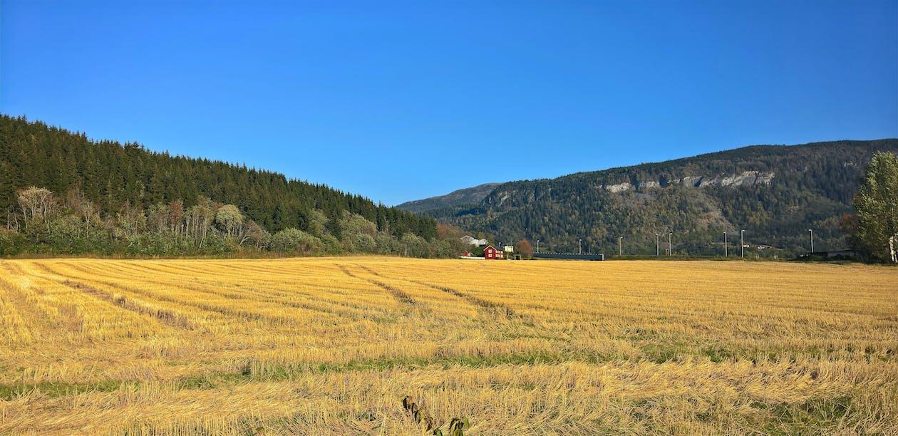 αγρόκτημα, ανάπτυξη, βουνό