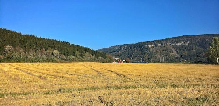 Landscape Photography of Green Fields