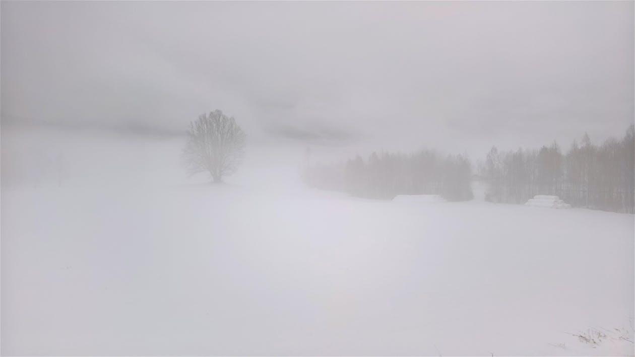 berkabut, kabut, lansekap