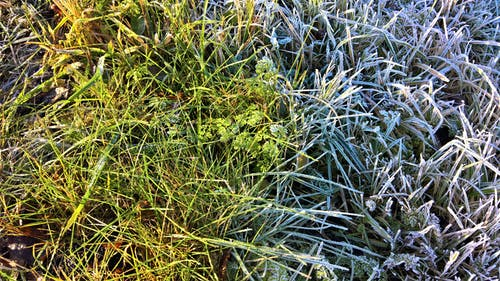 Бесплатное стоковое фото с морозная погода, морозный, покрытый инеем, трава