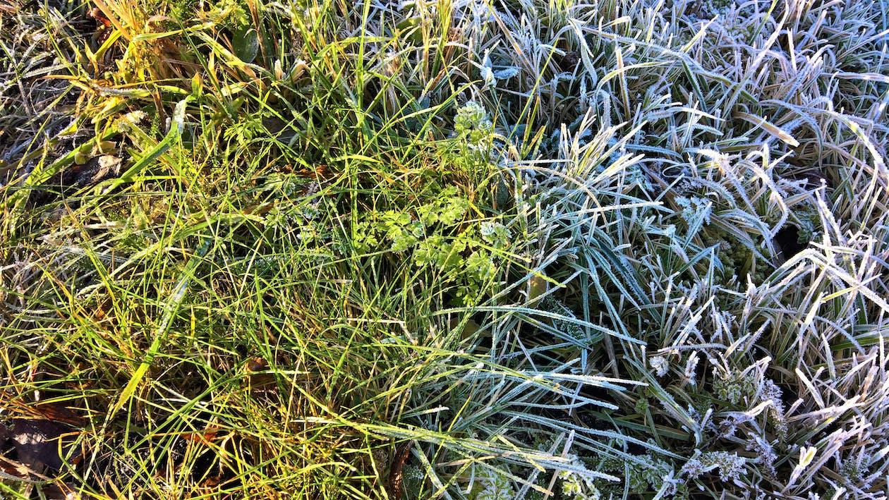 băng giá, cỏ, mờ