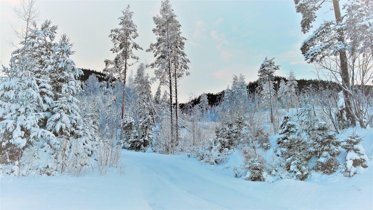 hutan, musim dingin, musim salju menyenangkan